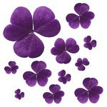 Purple Clover Clothing