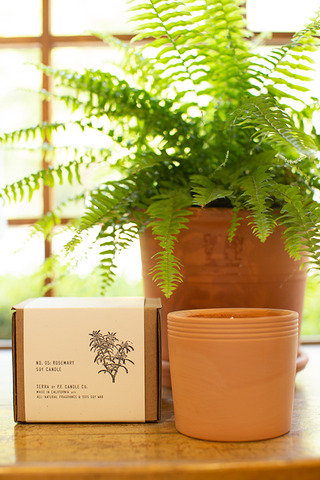 P.F Candle Co. Rosemary Terracotta Candle