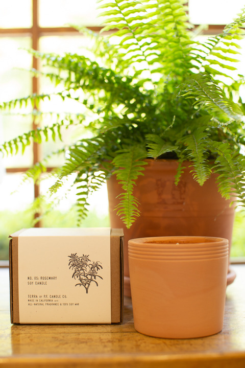 PF Candle Co Rosemary Terracotta Candle